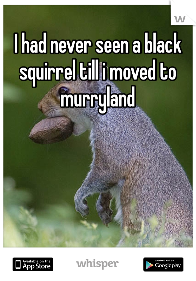 I had never seen a black squirrel till i moved to murryland