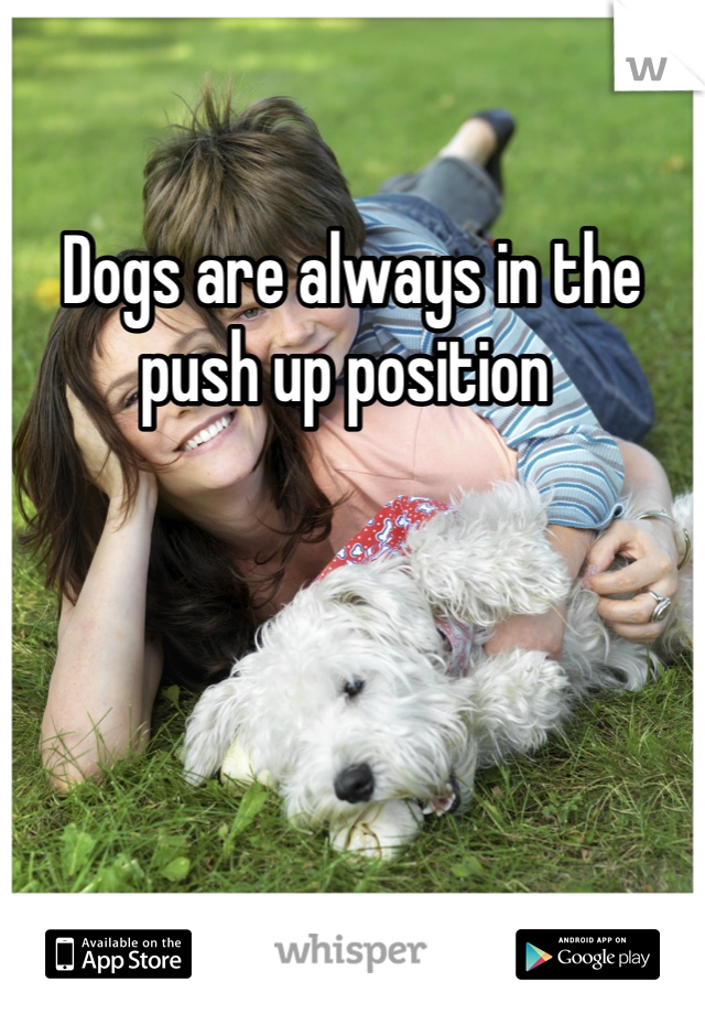 Dogs are always in the push up position