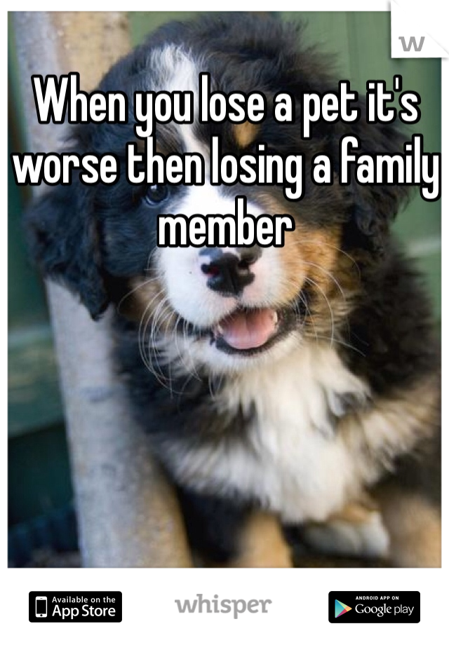 When you lose a pet it's worse then losing a family member