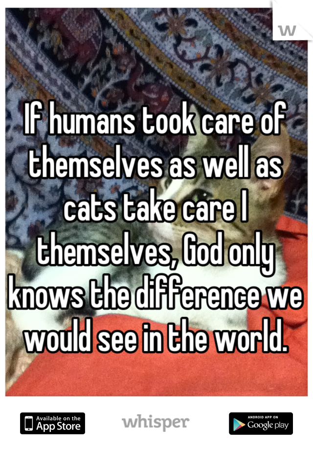If humans took care of themselves as well as cats take care I themselves, God only knows the difference we would see in the world.