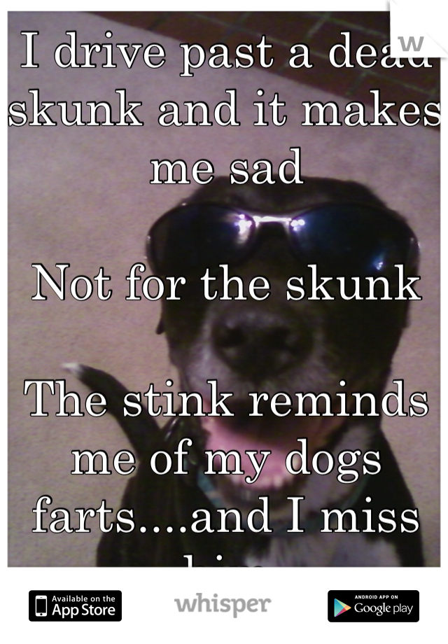 I drive past a dead skunk and it makes me sad   Not for the skunk  The stink reminds me of my dogs farts....and I miss him