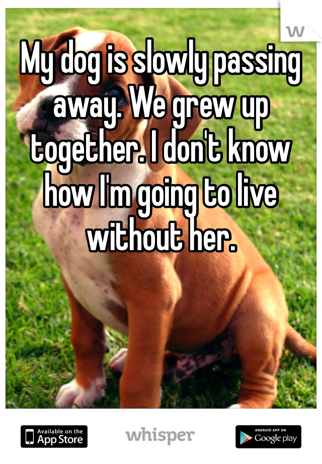 My dog is slowly passing away. We grew up together. I don't know how I'm going to live without her.
