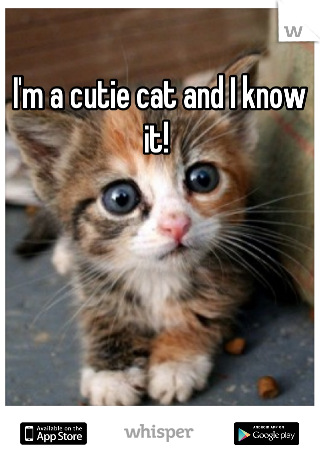 I'm a cutie cat and I know it!