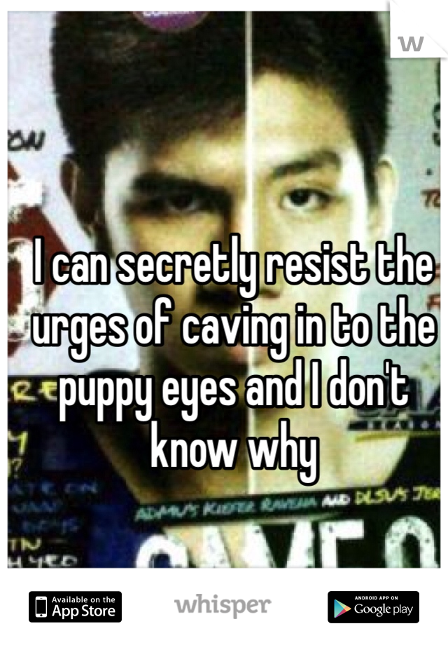 I can secretly resist the urges of caving in to the puppy eyes and I don't know why