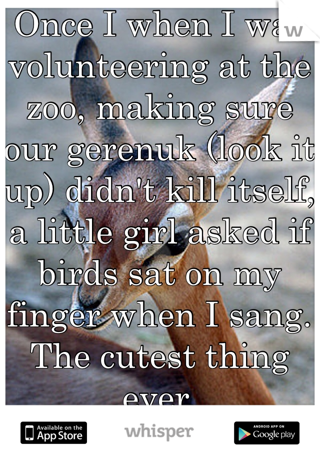 Once I when I was volunteering at the zoo, making sure our gerenuk (look it up) didn't kill itself, a little girl asked if birds sat on my finger when I sang.  The cutest thing ever.