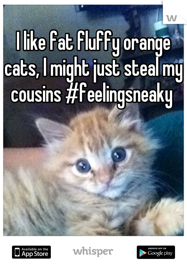 I like fat fluffy orange cats, I might just steal my cousins #feelingsneaky