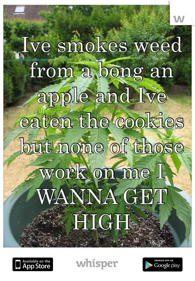 Ive smokes weed from a bong an apple and Ive eaten the cookies but none of those work on me I WANNA GET HIGH