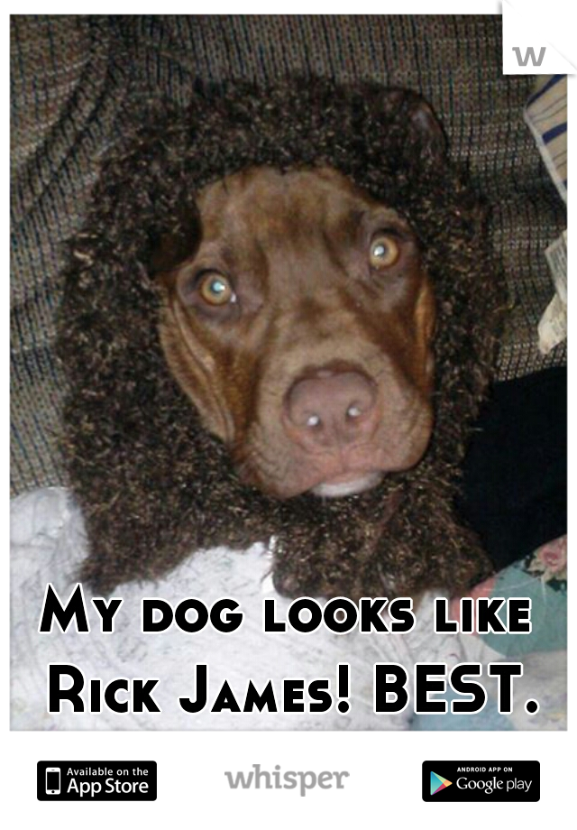 My dog looks like Rick James! BEST. DOG. EVER!