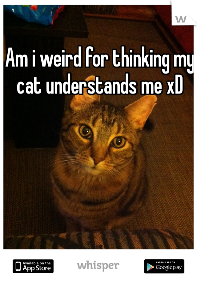 Am i weird for thinking my cat understands me xD