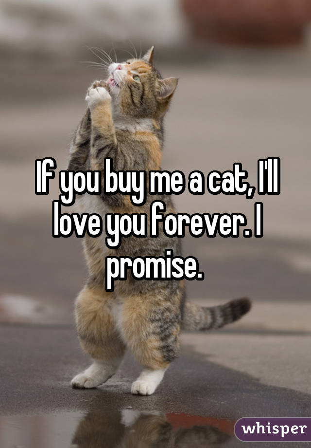 If you buy me a cat, I'll love you forever. I promise.