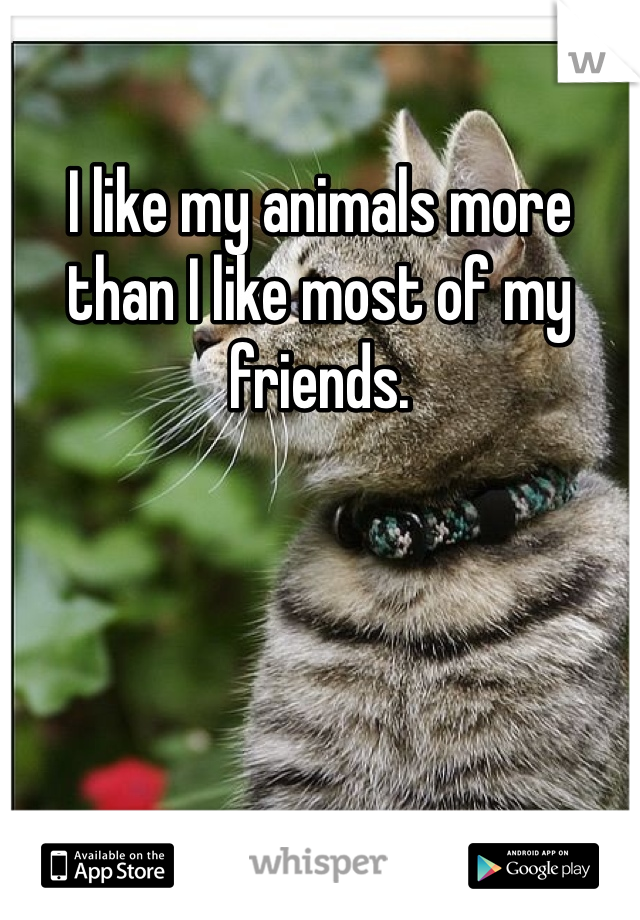 I like my animals more than I like most of my friends.
