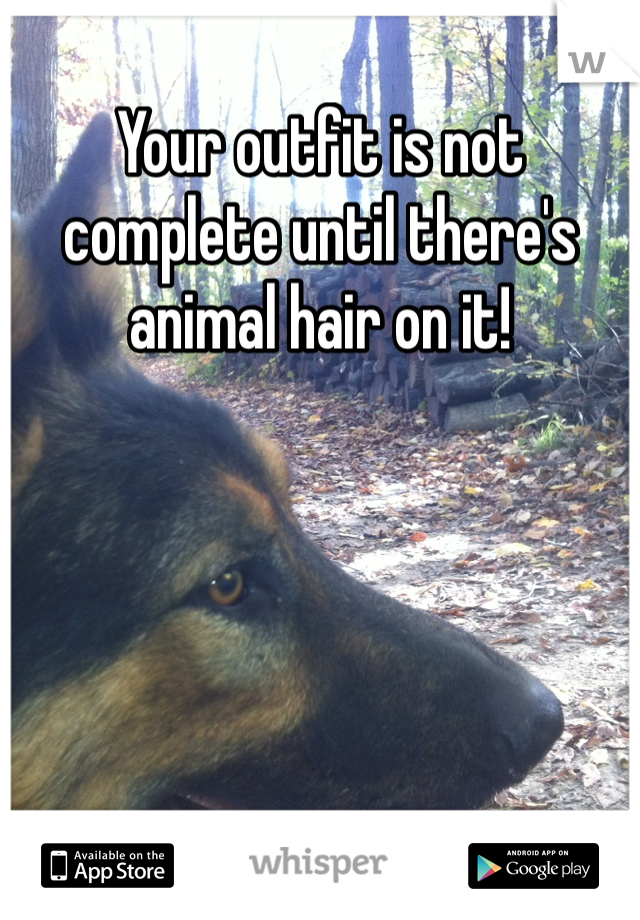 Your outfit is not complete until there's animal hair on it!