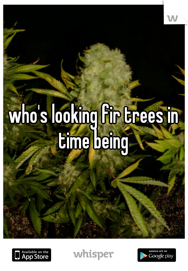 who's looking fir trees in time being