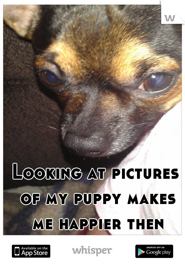 Looking at pictures of my puppy makes me happier then anything else. <3