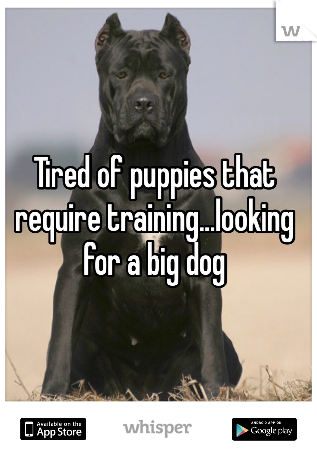 Tired of puppies that require training...looking for a big dog