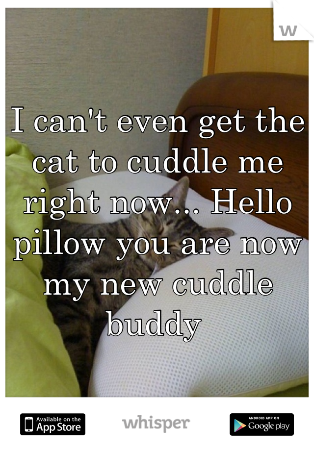 I can't even get the cat to cuddle me right now... Hello pillow you are now my new cuddle buddy
