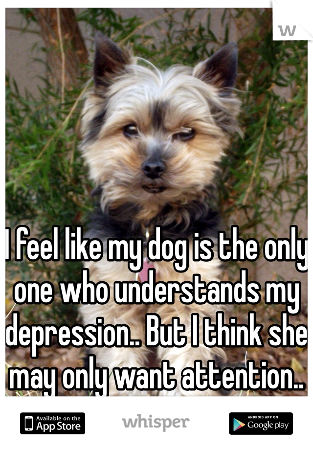 I feel like my dog is the only one who understands my depression.. But I think she may only want attention..