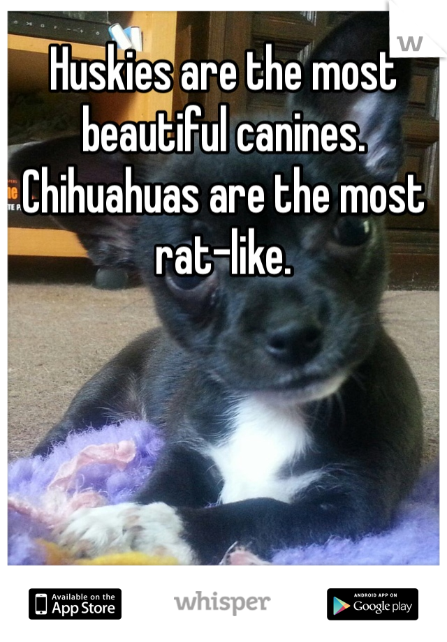 Huskies are the most beautiful canines. Chihuahuas are the most rat-like.