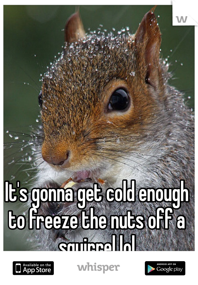 It's gonna get cold enough to freeze the nuts off a squirrel lol