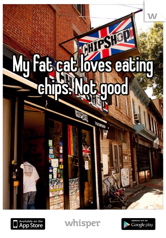 My fat cat loves eating chips. Not good