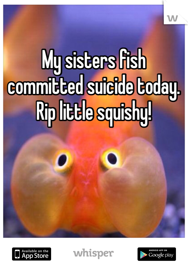 My sisters fish committed suicide today.  Rip little squishy!