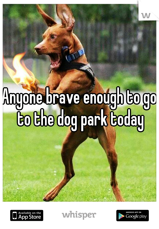 Anyone brave enough to go to the dog park today