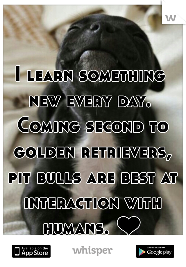 I learn something new every day.  Coming second to golden retrievers, pit bulls are best at interaction with humans. ❤