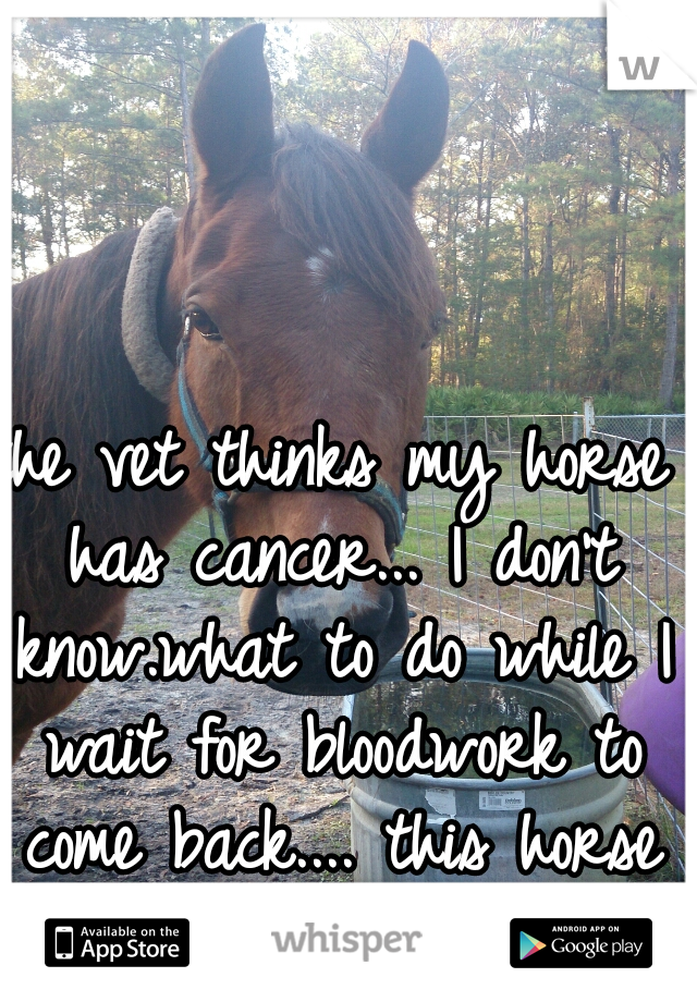 the vet thinks my horse has cancer... I don't know.what to do while I wait for bloodwork to come back.... this horse is my world...
