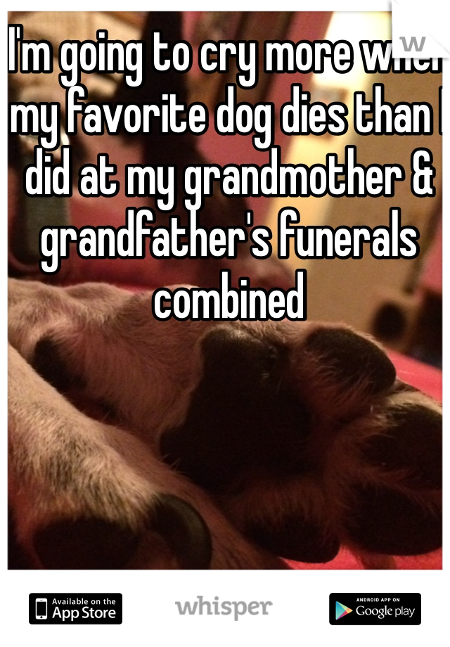 I'm going to cry more when my favorite dog dies than I did at my grandmother & grandfather's funerals combined