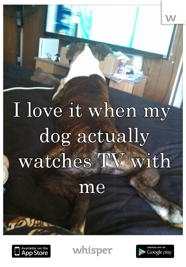 I love it when my dog actually watches TV with me