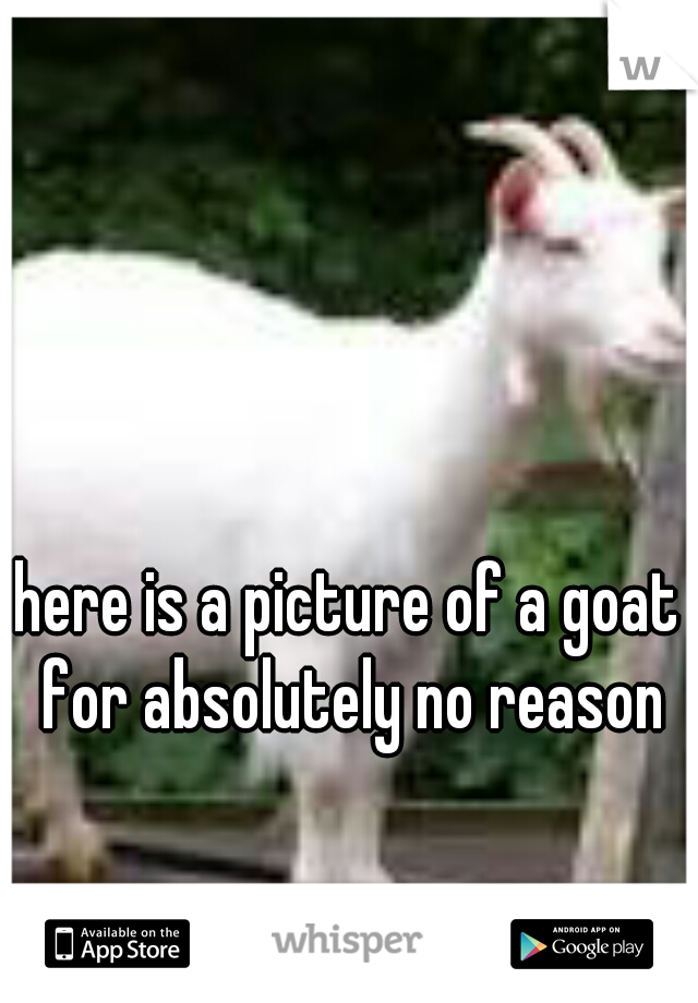 here is a picture of a goat for absolutely no reason