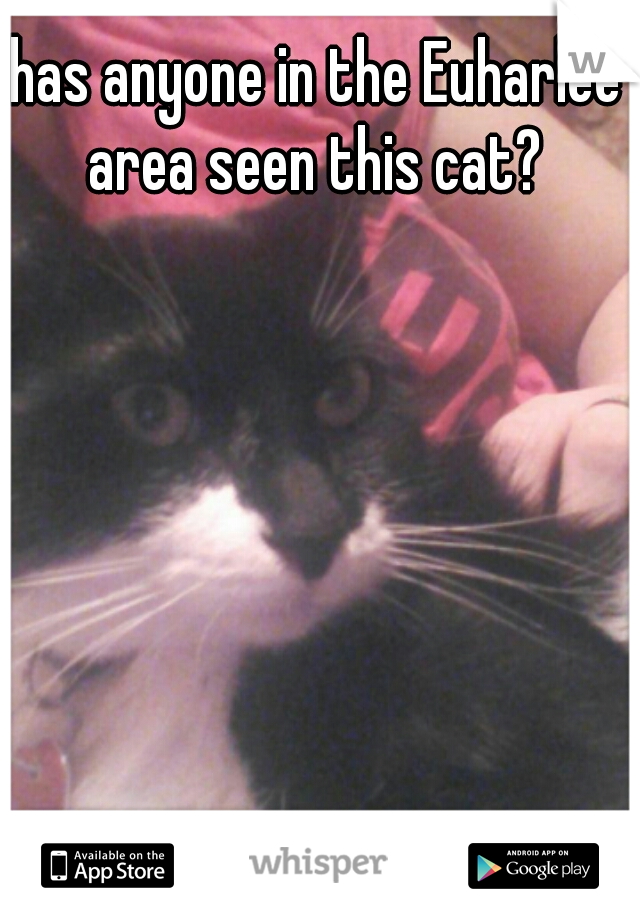 has anyone in the Euharlee area seen this cat?
