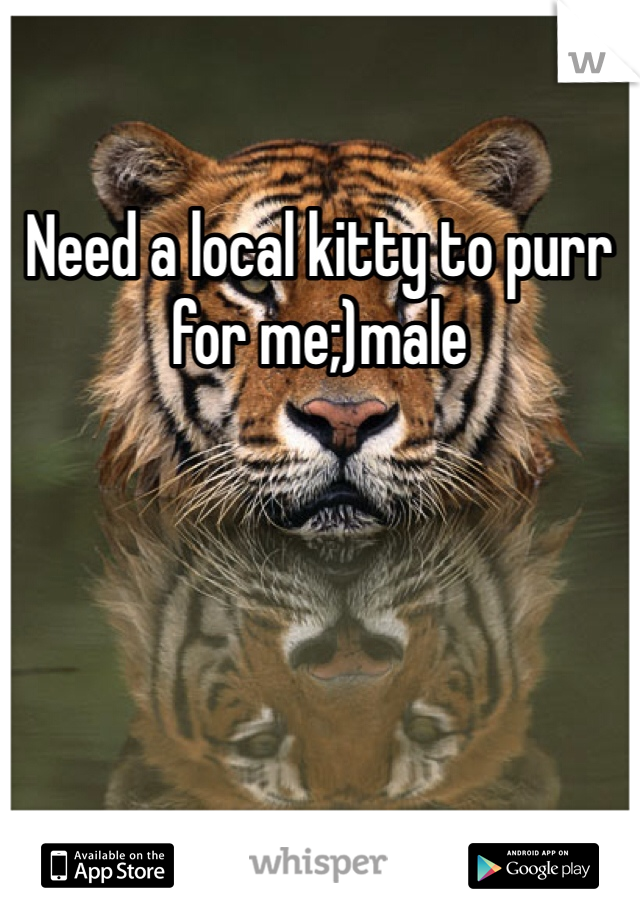 Need a local kitty to purr for me;)male