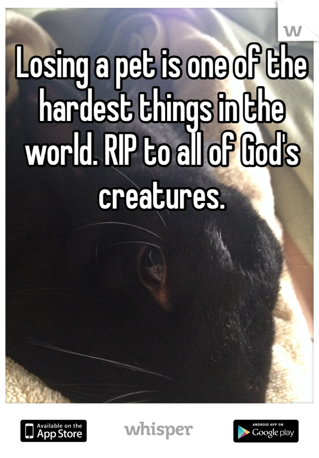 Losing a pet is one of the hardest things in the world. RIP to all of God's creatures.