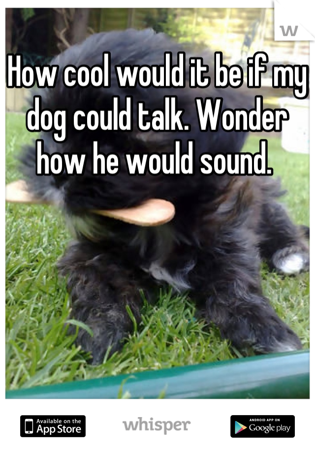 How cool would it be if my dog could talk. Wonder how he would sound.