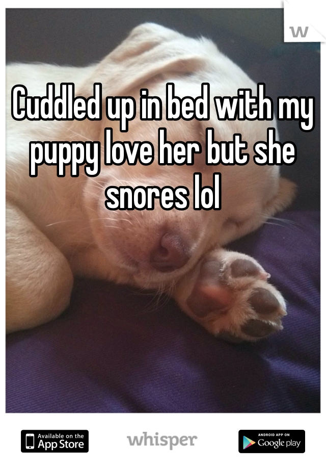 Cuddled up in bed with my puppy love her but she snores lol