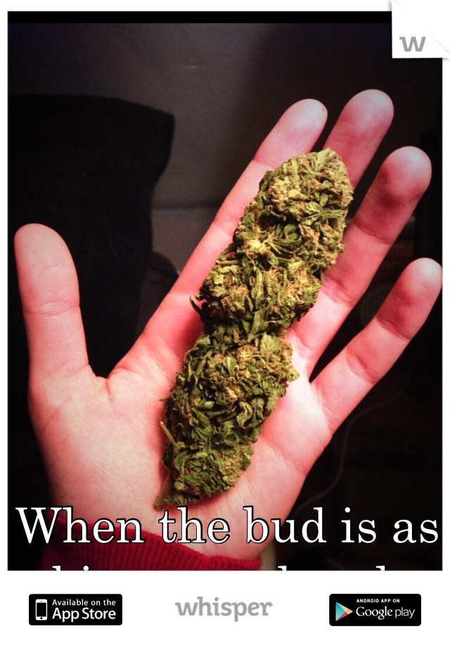 When the bud is as big as my hand.