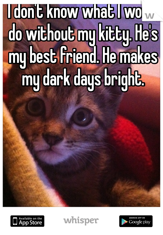 I don't know what I would do without my kitty. He's my best friend. He makes my dark days bright.