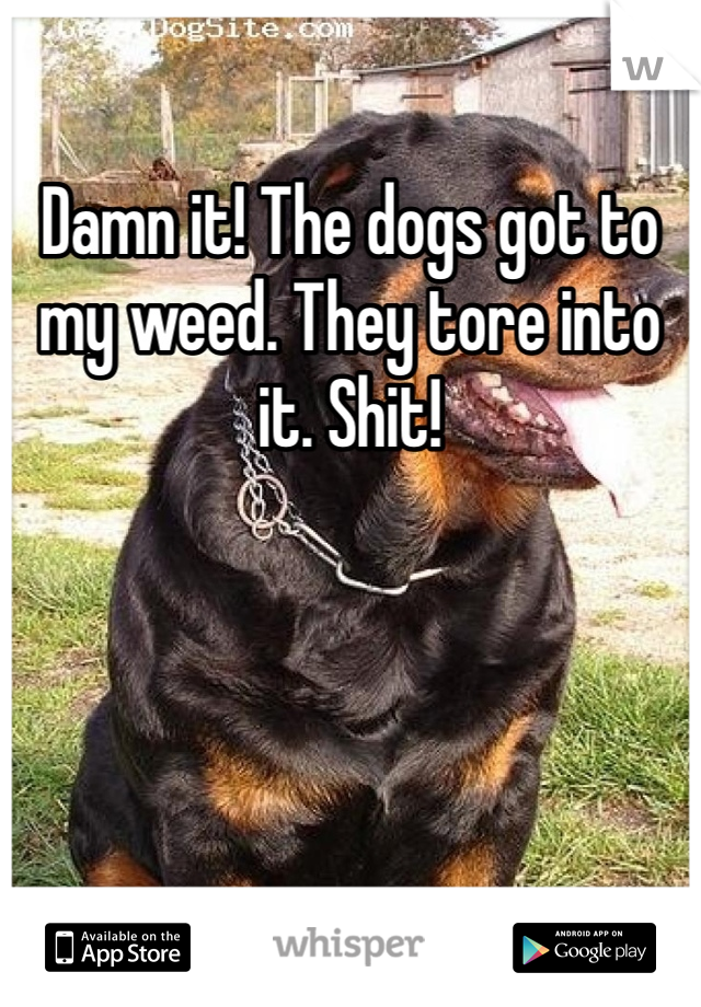 Damn it! The dogs got to my weed. They tore into it. Shit!