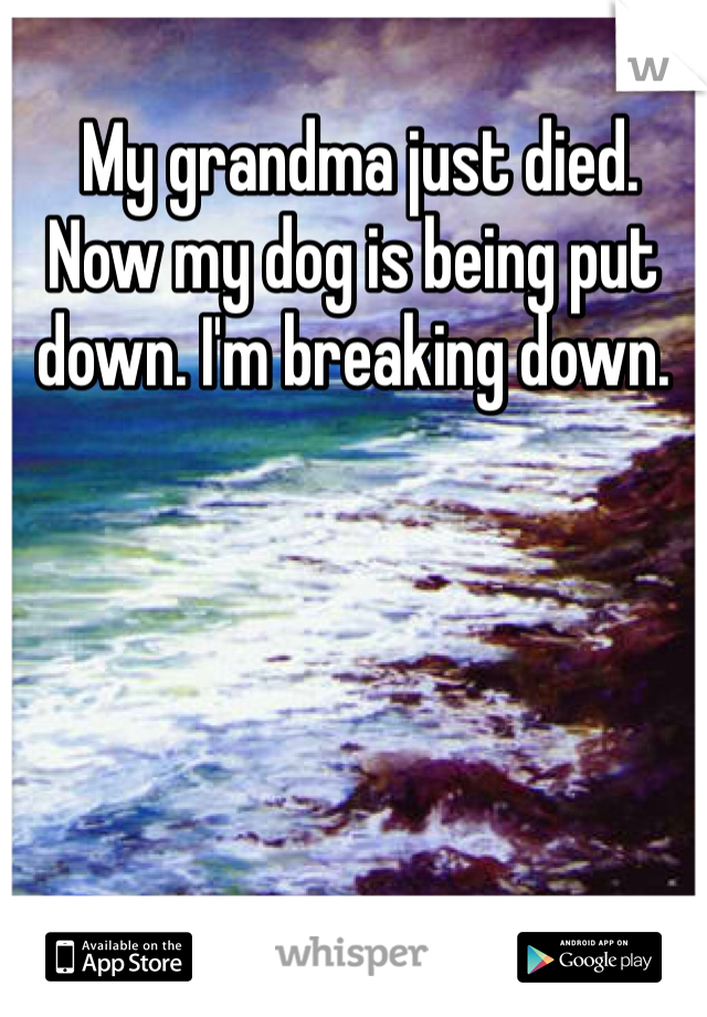 My grandma just died. Now my dog is being put down. I'm breaking down.