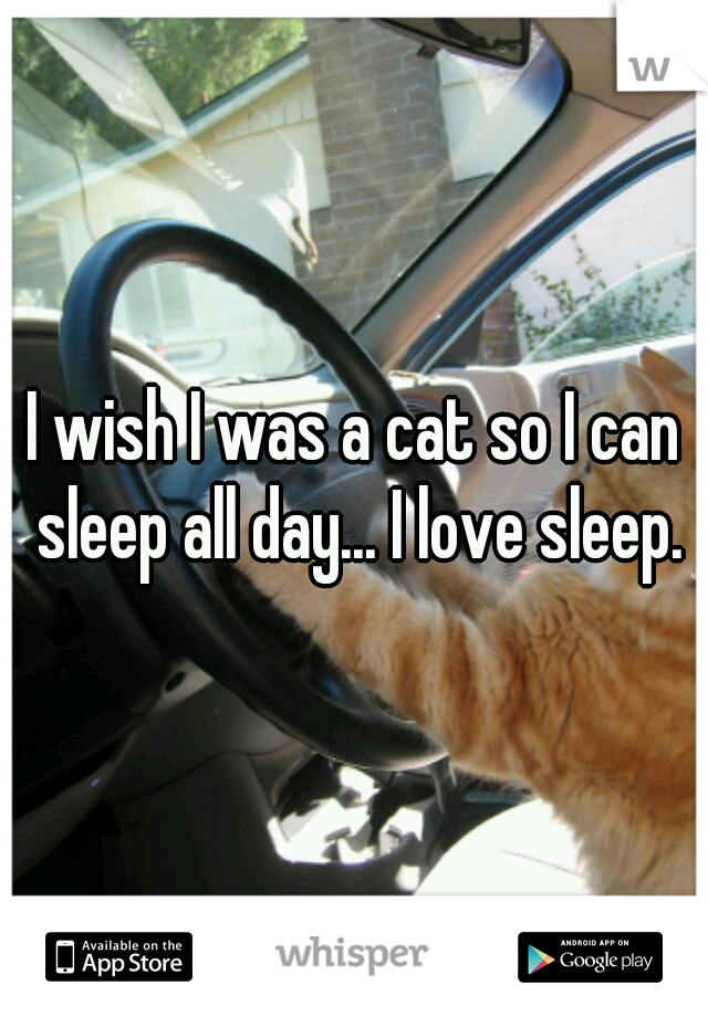 I wish I was a cat so I can sleep all day... I love sleep.