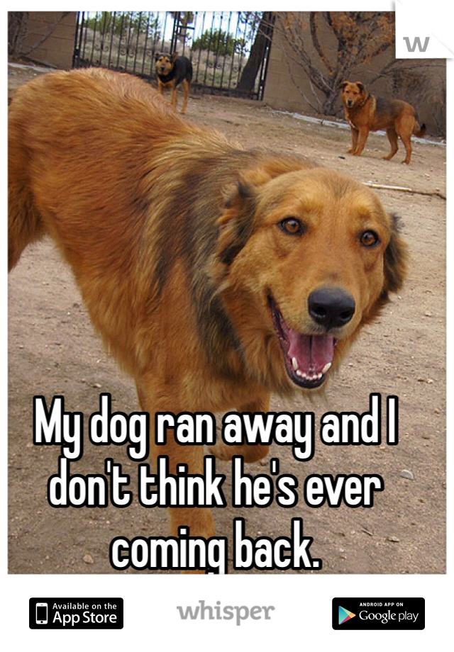 My dog ran away and I don't think he's ever coming back.