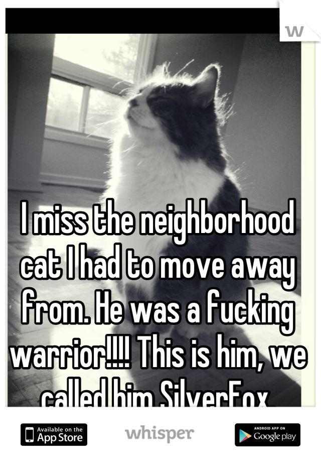 I miss the neighborhood cat I had to move away from. He was a fucking warrior!!!! This is him, we called him SilverFox.