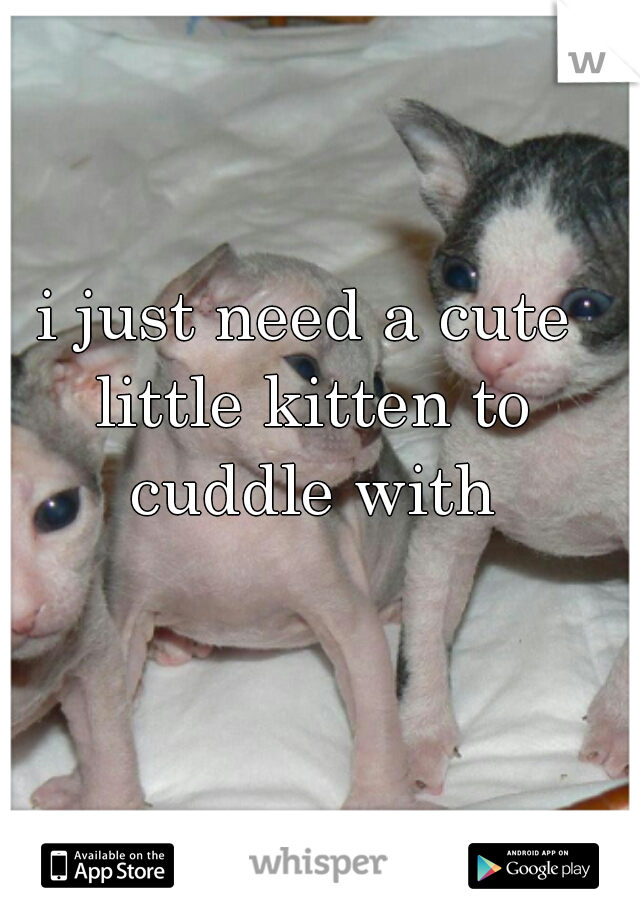 i just need a cute little kitten to cuddle with