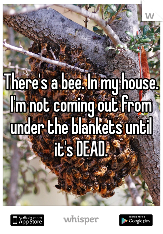 There's a bee. In my house. I'm not coming out from under the blankets until it's DEAD.