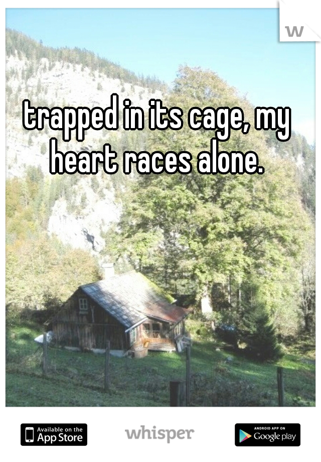 trapped in its cage, my heart races alone.
