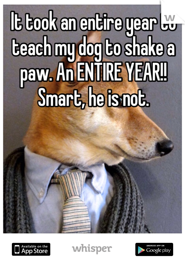 It took an entire year to teach my dog to shake a paw. An ENTIRE YEAR!! Smart, he is not.