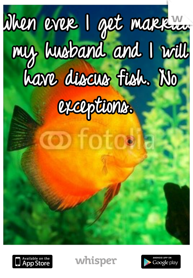 When ever I get married my husband and I will have discus fish. No exceptions.