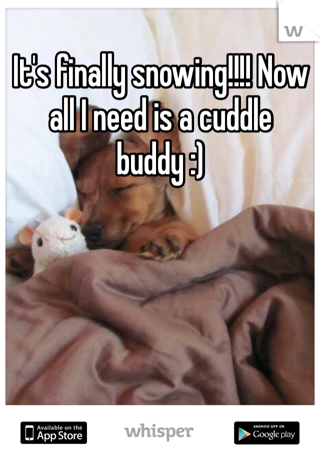 It's finally snowing!!!! Now all I need is a cuddle buddy :)