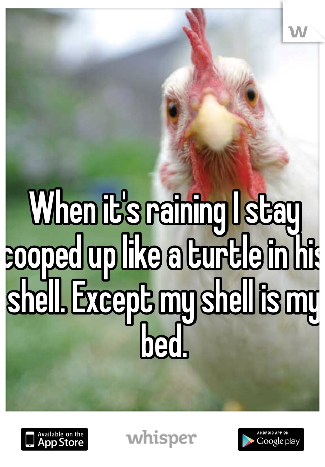 When it's raining I stay cooped up like a turtle in his shell. Except my shell is my bed.